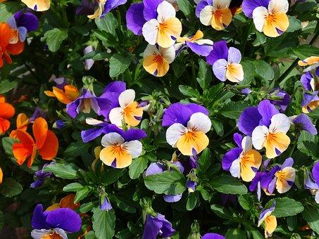 Flowers, Flower, Purple Flower, Pink, White, Garden