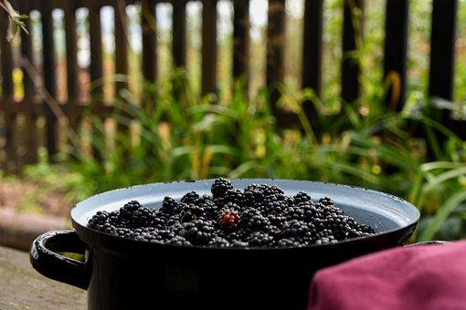 Blackberries, Pot, Container, Blackberry, Fruit