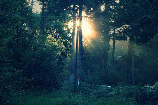 Solar, Light, Forest, Nature, Silhouette, Reflection