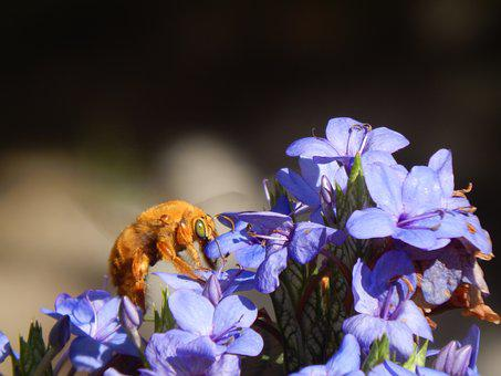 Bumblebee, Orange, Sucking, Flowers, Lilacs