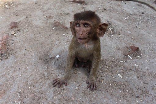 Monkey, Sweet, Cute, Animal, Animal Photo, Surprised