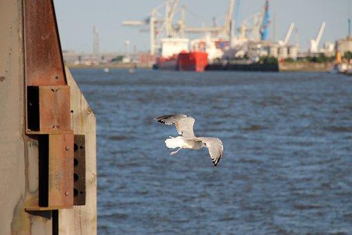 Seagull, Birds, Animals, Water Bird, Close, Water, Sea