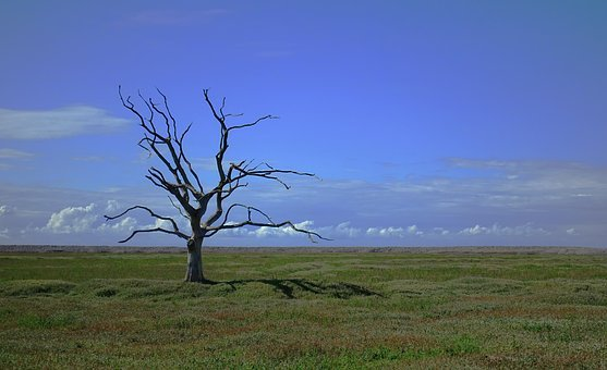 Tree, Dead, Alone, Death, Lonely, Loneliness