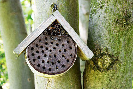Ul, Bee, Honey, Bees, Summer, Pasieka