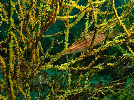 Fish, Diving, Underwater World, Sea
