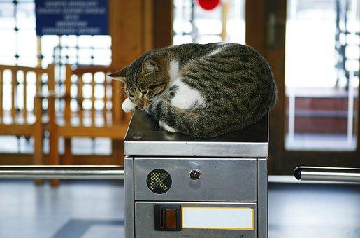 Cat, Subway, Funny, Sleepyhead, Sleep, Relax, Animal