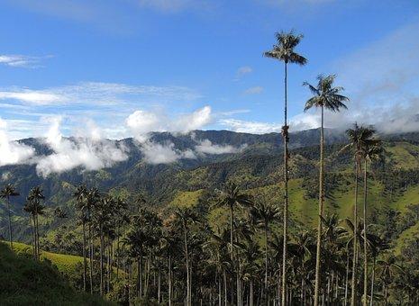 Landscape, Mountains, Palm Wax, Tolima