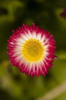 Flower, Plant, Flowers, Nature, Garden, Beautiful