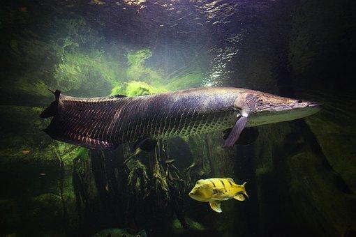 Fish, Aquarium, Sea, Nature, Animals, Underwater
