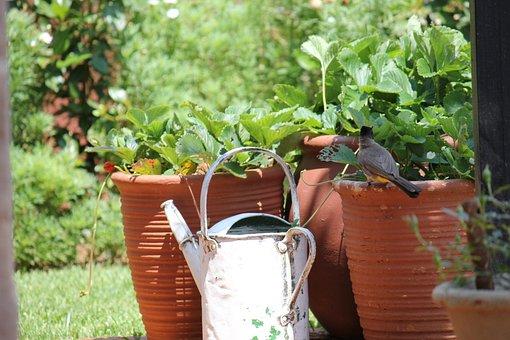 Garden, Bird, Pots, Watering Can, Nature, Animal, Plant