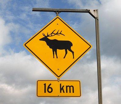 Road Sign, Wild, Warning, Slower, Traversing Wild, Deer