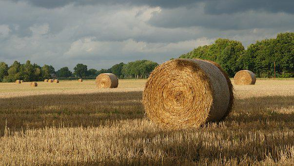 Straw Bales, Straw, Field, Round Bales, Agriculture