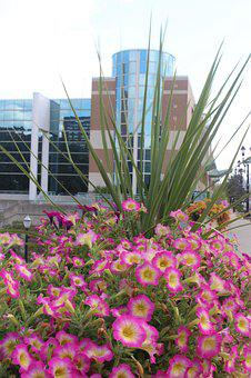 Flowers, Building, Pink, Nature, Architecture