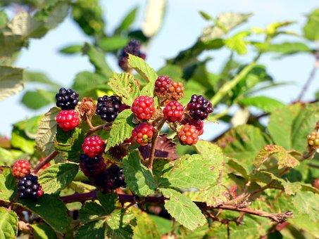 Fruit, Blackberries, Food, Nature, Red Fruits, Berries