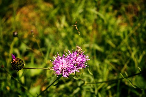 Bee, Flower, Blossom, Bloom, Plant, Insect, Macro