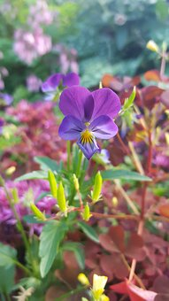 Flower, Purple, Purple Flower, Nature, Bloom, Plant