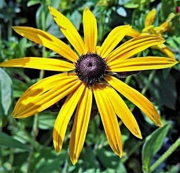 Plant, Coneflower, Echinacea, Flower, Yellow Flowers