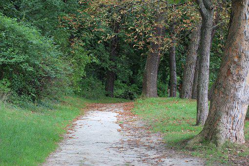 Path, In The Forest, Forest, Nature, Walk, Branches