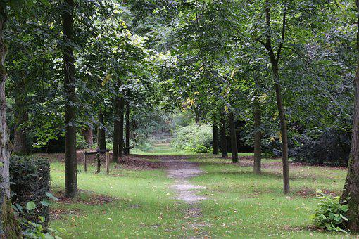Path, Way, Pathway, Journey, Business, Travel, Tree