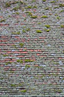 Pattern, Brick, Nature, Green, Pl, Landscape