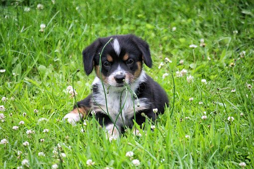 Puppy, Doggy, Grass, Pet, Snout, And The Tramp, Happy