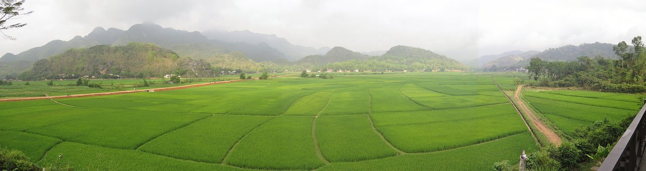 Mai Chau, Vietnam, Rice Fields, Asia