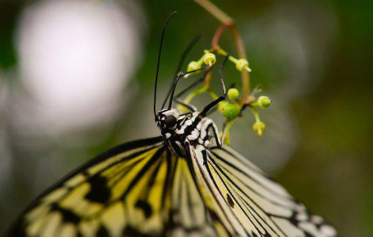 Butterfly, Upside Down, Hanging, Insect, Green, Nature