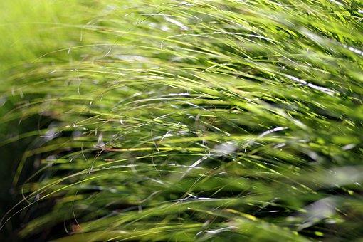 Grass, Fancy, Vegetation, Shrubs, Decorative, Green
