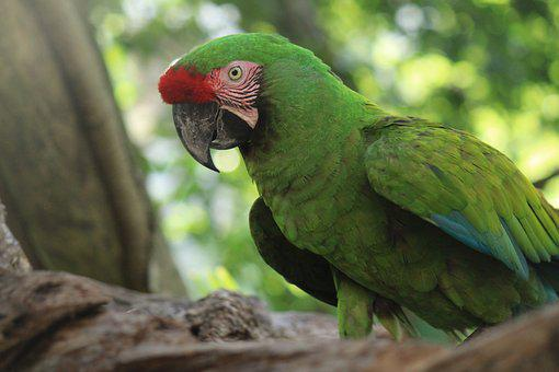 Ave, Parrot, Tropical Bird, Animal, Bird, Animals