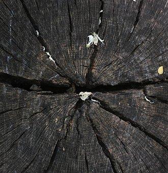 Tree, Texture, Macro, Brown, Colors, Detail, Pattern