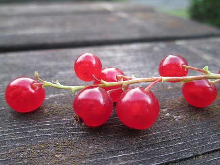Red Currant, Many Currants, Currant, Red, Berry, Garden