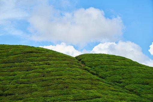 Landscape, Green, Tea, Field, Mountain, Taylor, High