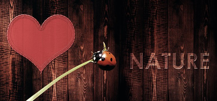 Nature, Love Nature, Live, Insect, Ladybug, Lucky Charm