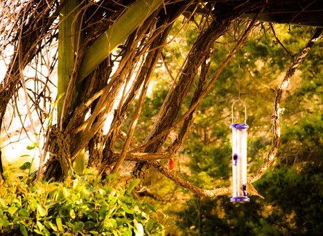 House Finches, Nature, Landscape