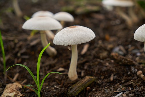 Mushroom, White, Color Image, Perspective, Fresh