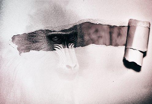 Monkey, Composing, Photo Montage, Paper