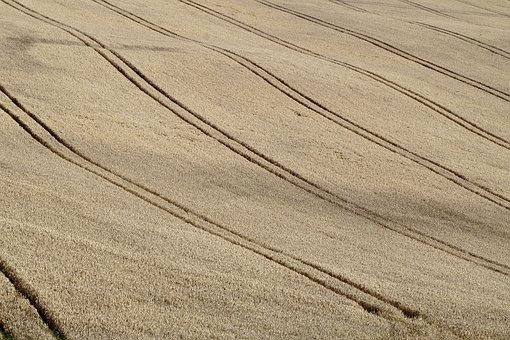 Field, Corn, Agriculture, Poland Village, Harvest