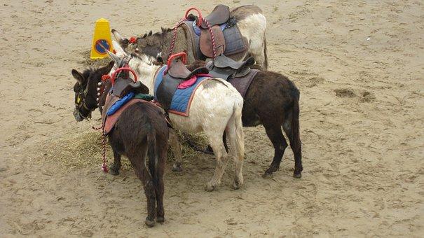 Seaside, Donkeys, Beach, Sand, Sea, Vacation, Saddle