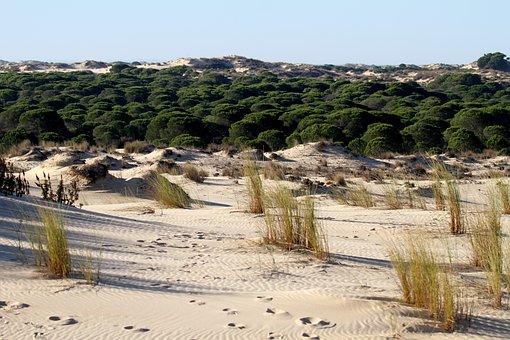 Doñana National Park, Spain, Dune, Scrub Pines, Sand