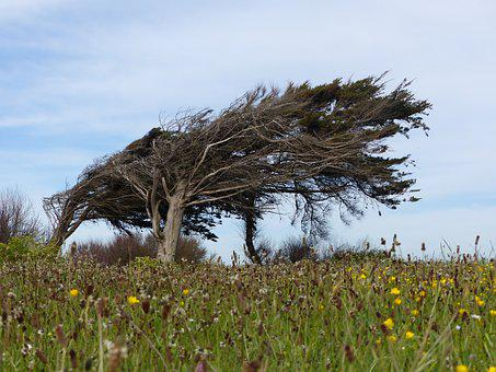 Tree, Wind, Leaning, Leaning Tree, Nature, Landscape