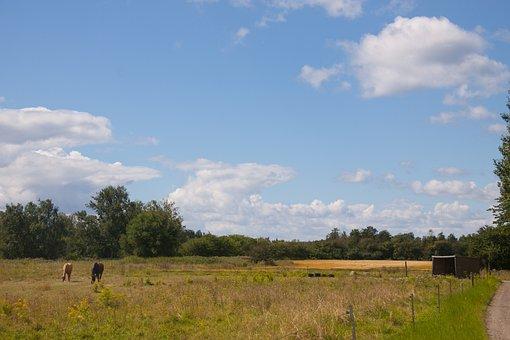 Field, Blue Sky, Clouds, Sums, Vegetation, Trees
