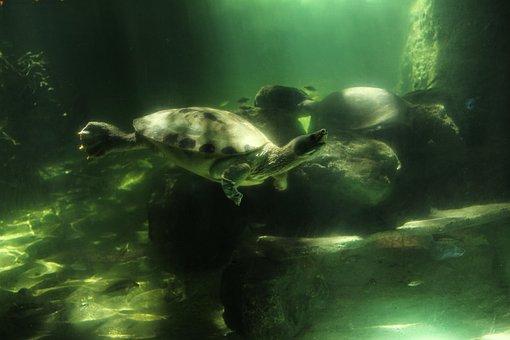 Marine, Turtles, Is