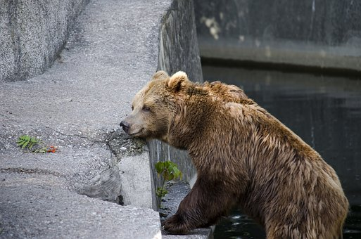 The Bear, Teddy Bear, Brown, Misiek, Warsaw, Animal