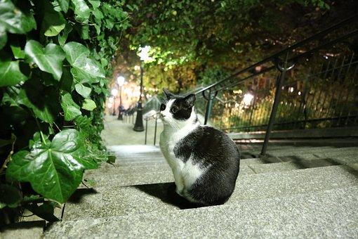 Cat, Stairs, Paris, Black, White, Cute, Sitting, Pet