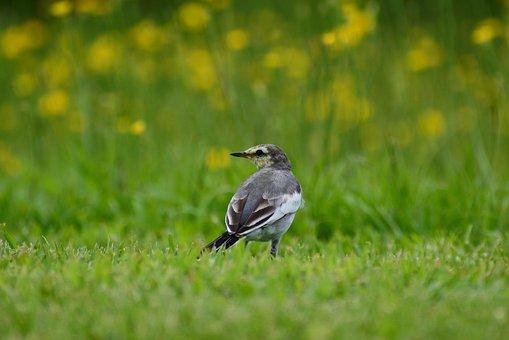Animal, Plant, Flowering Plant, Little Bird