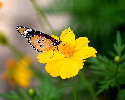 Nature, Butterfly, Spring, Colorful, Natural, Flower