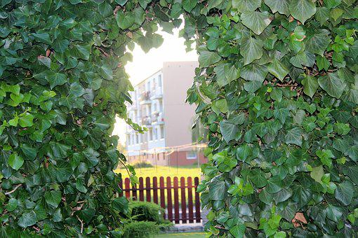 Ivy, Nature, View, Foliage, Creeper, Decoration, Green