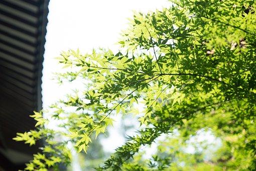 Plant, Green, Eaves