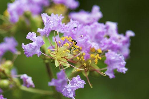 Flower, Forest, Nature, Spring, Summer, Floral