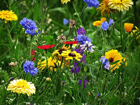 Flowers, Yellow, Summer, Nature, Garden, Plant